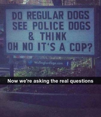 best-damn-photos-police-dogs