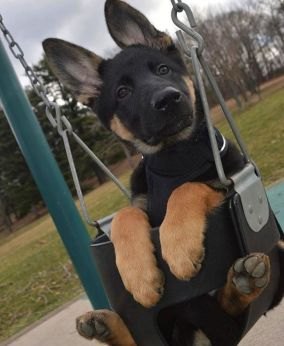 best-damn-photos-swingset-puppy